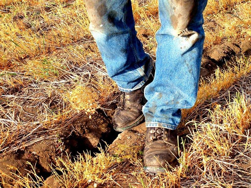 год сухой земли грубый стоковые фотографии rf