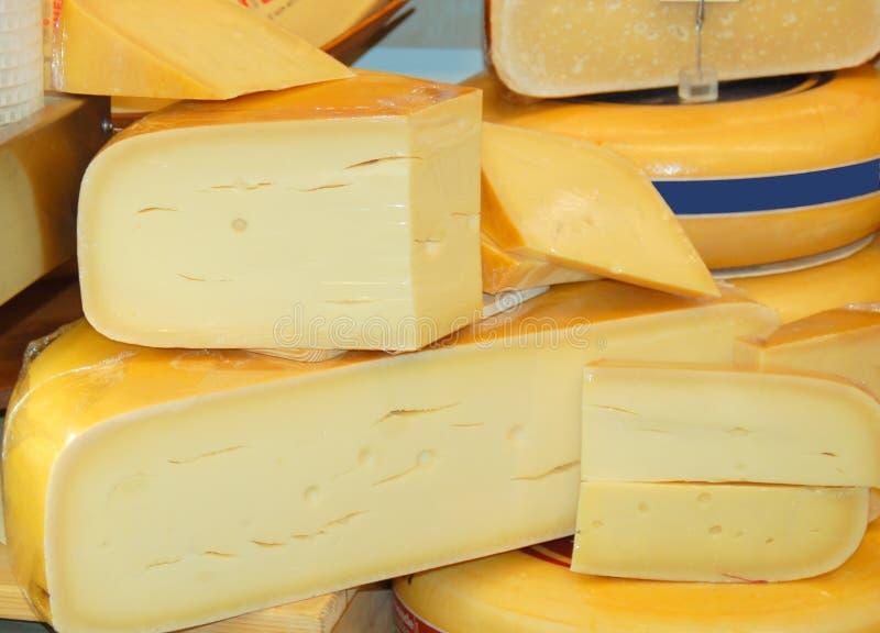голландец сыра стоковое фото