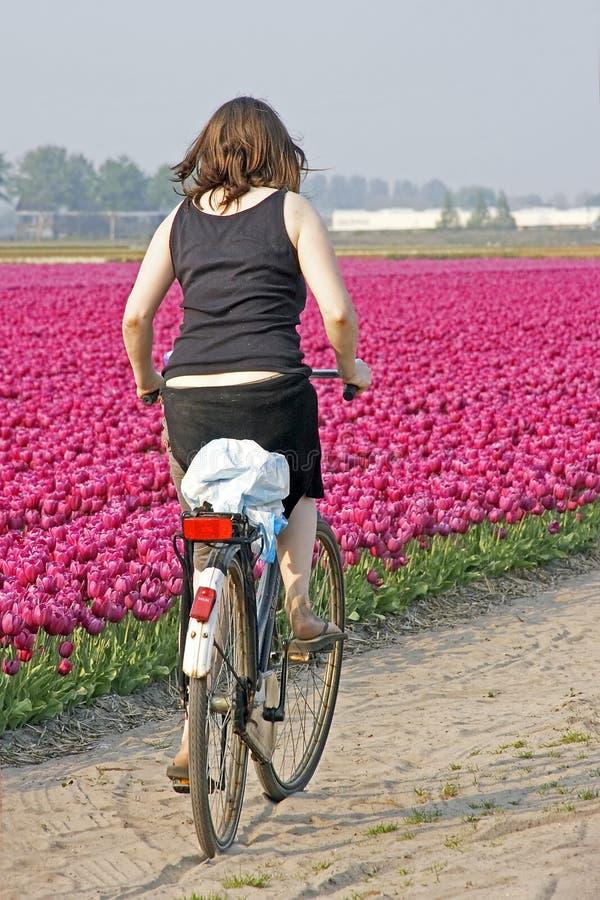 голландец типичный стоковая фотография