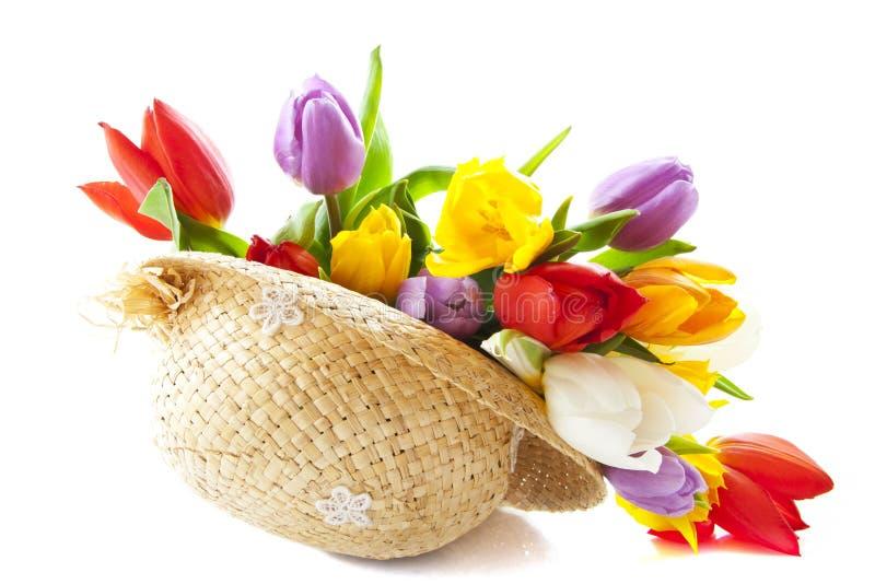 голландские реальные тюльпаны стоковое изображение rf