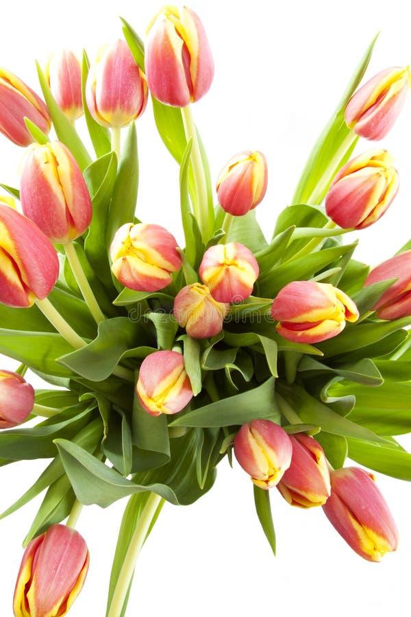 голландские тюльпаны стоковое изображение rf