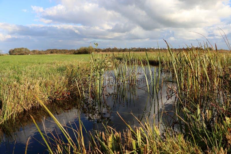 Голландский ландшафт в Оверэйселе стоковые фотографии rf