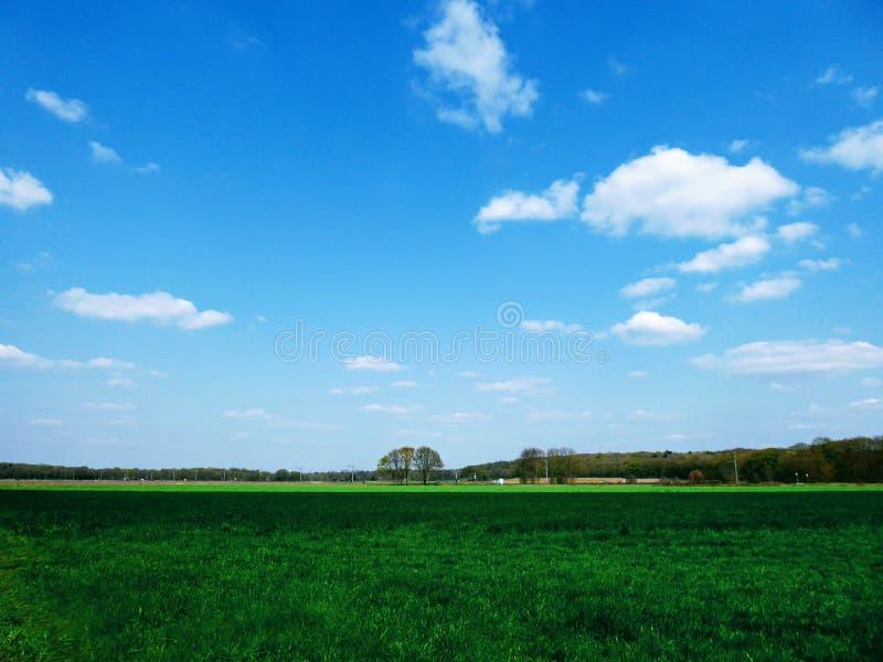 Голландский ландшафт сельскохозяйственных угодиь, весна с полями тра стоковое фото rf