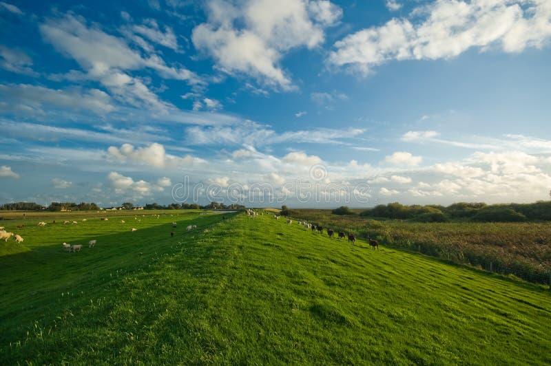 голландский ландшафт сельскохозяйствення угодье стоковое фото