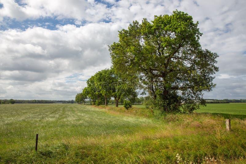 Голландский сельский ландшафт с полями травы и аркадой деревьев стоковые фотографии rf