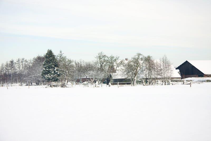 голландский снежок фермы стоковые изображения