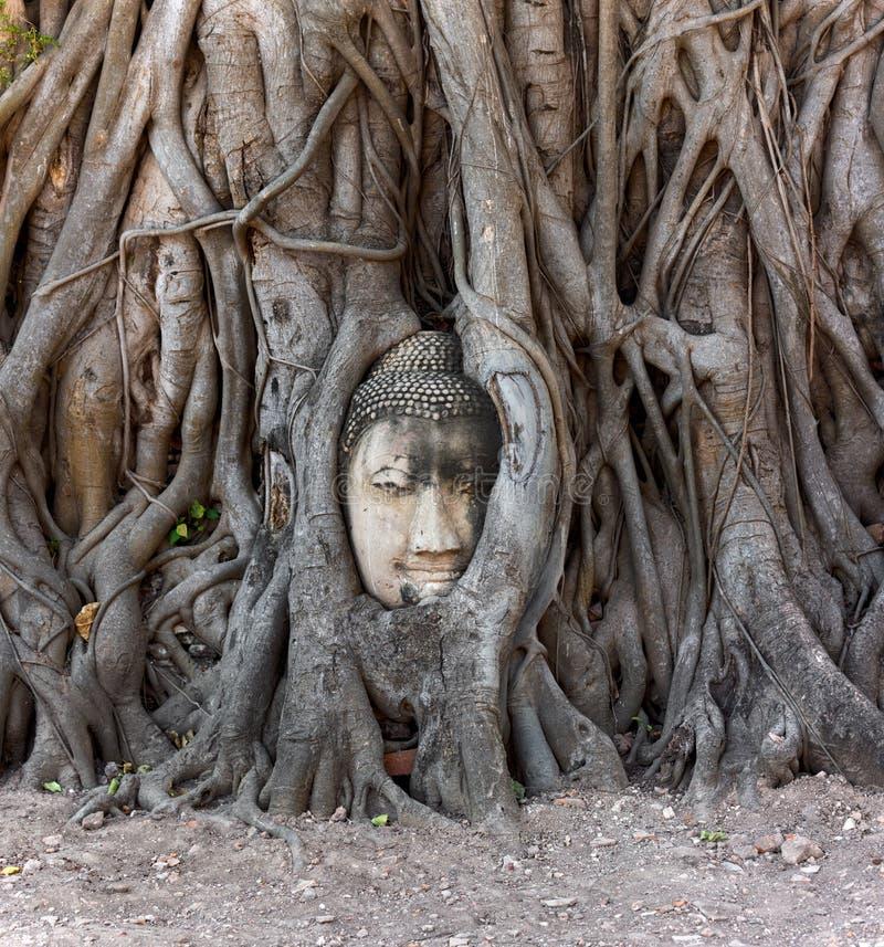 Голова Будды в баньяне, Таиланде стоковое изображение rf