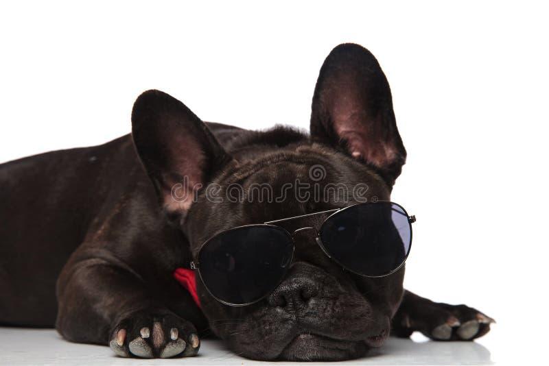 Голова лежа французского бульдога при солнечные очки смотря к стороне стоковая фотография