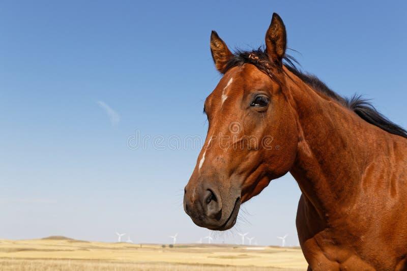 Голова лошади в ландшафте равнин в Северной Дакоте стоковые фотографии rf