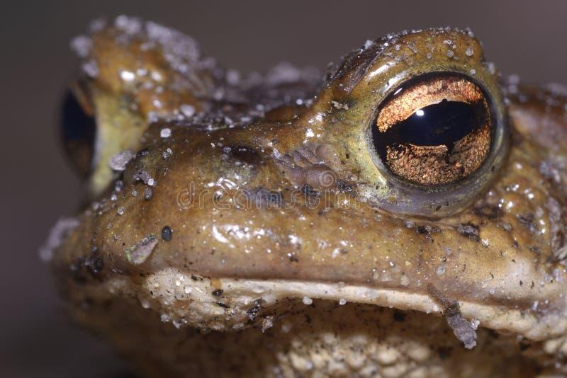 Голова лягушки стоковая фотография rf