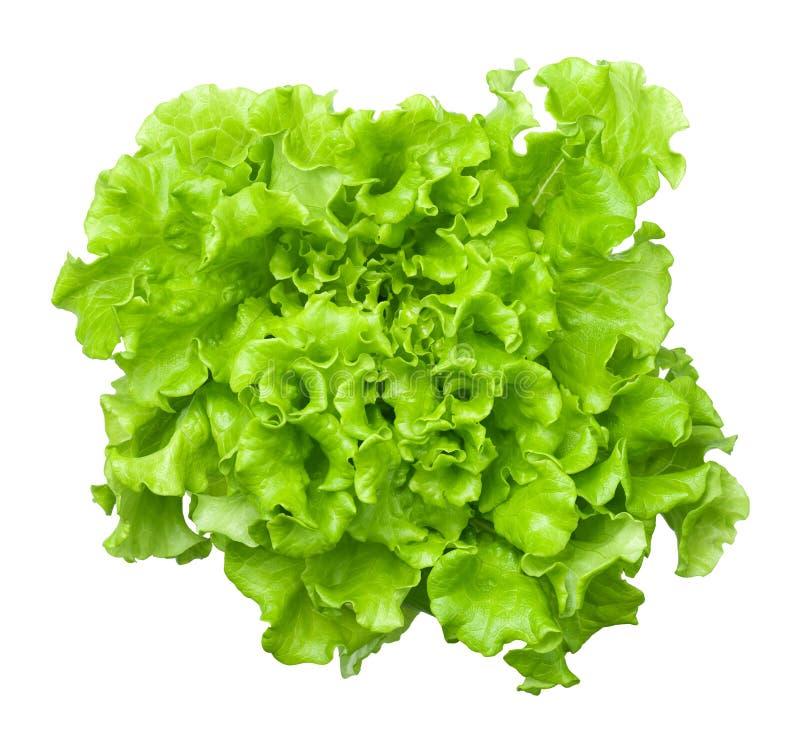 Голова салата салата изолированная на белой предпосылке стоковое фото rf
