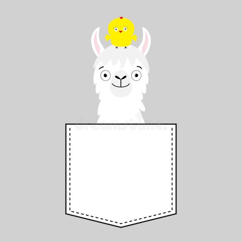Голова стороны альпаки ламы в кармане Курица шарж животных милый Характер Kawaii Штриховой пунктир Белый и черный цвет рубашка t иллюстрация штока