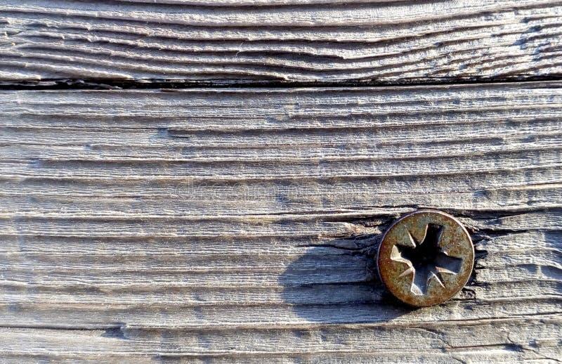 Головка винта на деревянной текстуре предпосылки Конец вверх по космосу экземпляра природы Фотография макроса стоковые фотографии rf