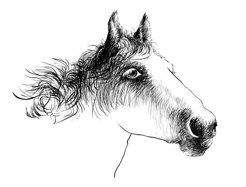 Головка лошади изолированная на белизне Портрет крупного плана стороны лошади Чертеж чернил бесплатная иллюстрация