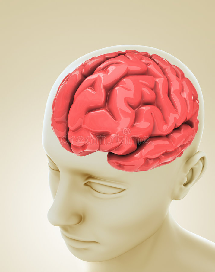 головка мозга иллюстрация вектора
