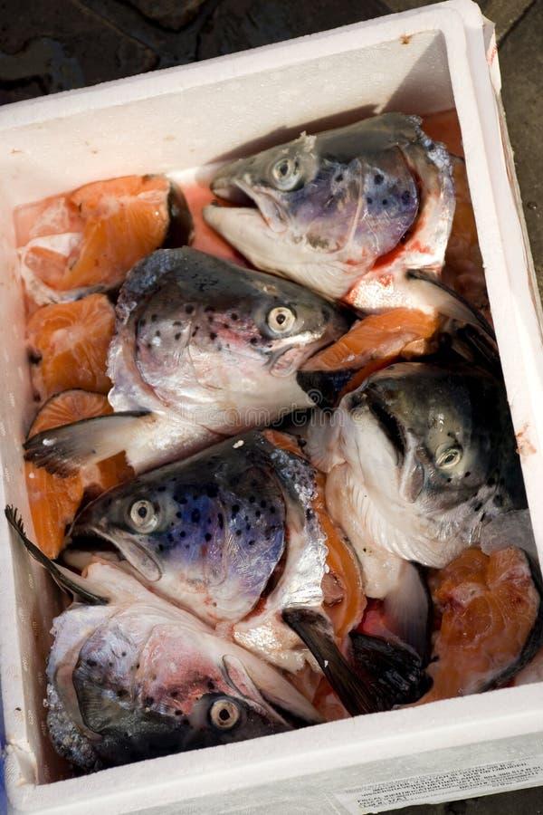 головки рыб стоковые фотографии rf