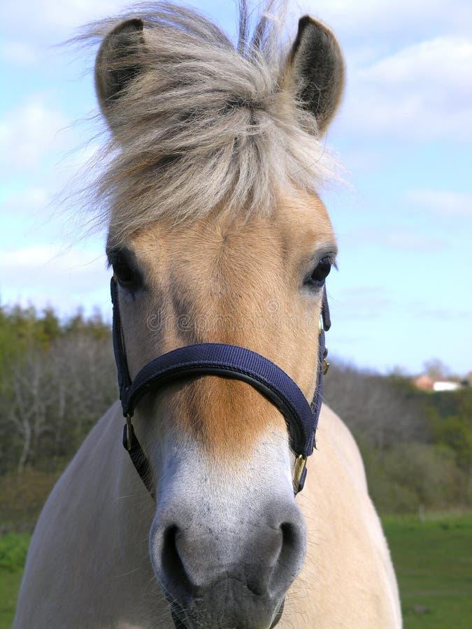 головная лошадь стоковое фото rf
