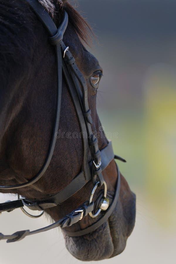 головная лошадь стоковое изображение