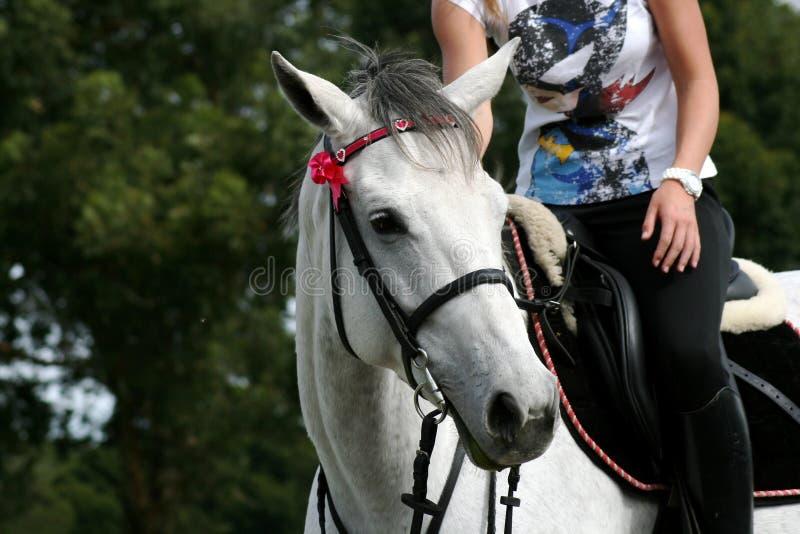 головной всадник лошади стоковое фото