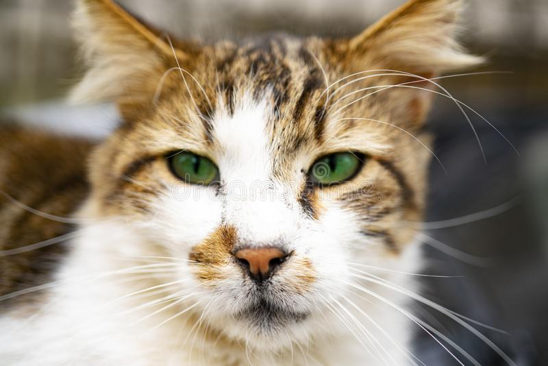 Голодный кот со смотреть зеленых глаз стоковая фотография rf