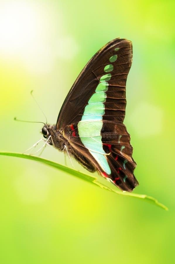 Голубая бабочка бутылки стоковое фото rf