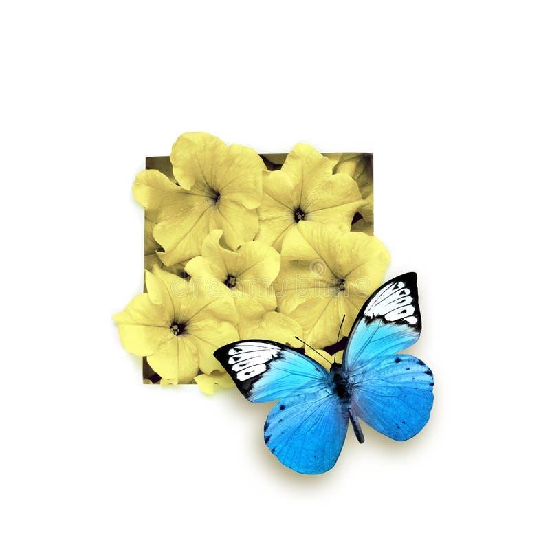 Голубая бабочка и цветок изолированные на белой предпосылке красивейшее насекомое стоковое фото rf
