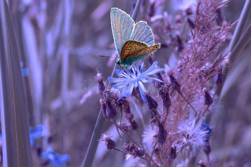 Голубая бабочка на цветке и траве cornflower, стоковая фотография