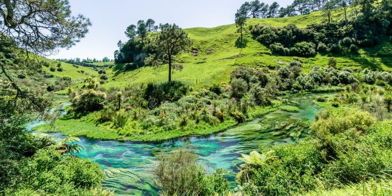 Голубая весна которая устроена на дорожке Te Waihou, Гамильтон Новая Зеландия стоковое изображение