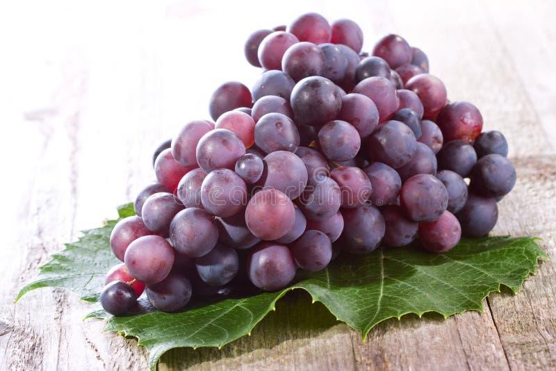 Голубая виноградина стоковые фото