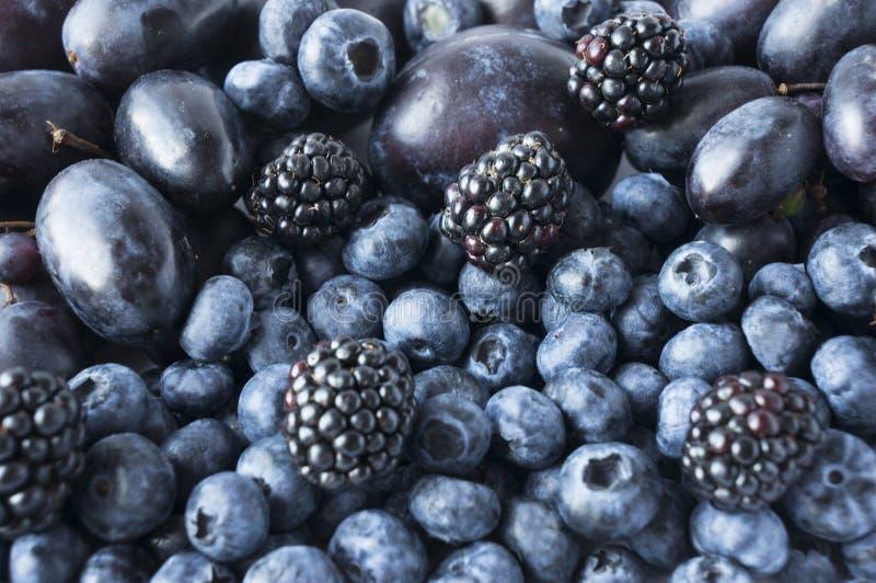Голубая и черная еда предпосылка плодоовощей и ягод Свежие ежевики, голубики, сливы и виноградины стоковое изображение