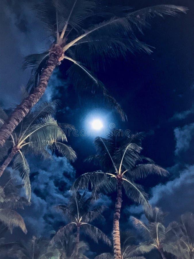Голубая луна над Waikiki, Гаваи стоковое изображение