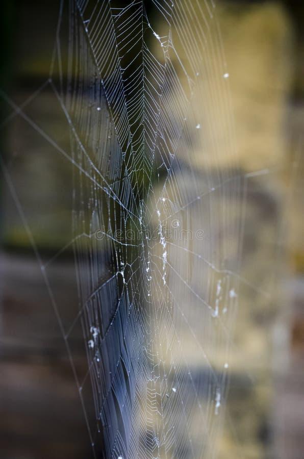 голубая мягкая сеть подкраской спайдера стоковое фото rf