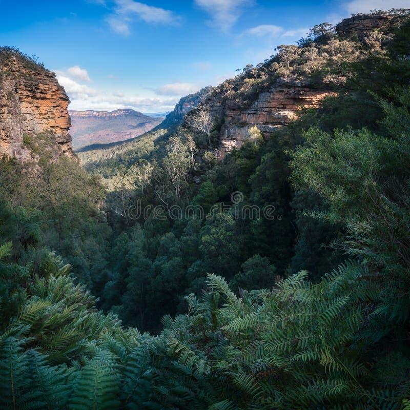 Голубая перспектива гор от Leura каскадирует идя след стоковое изображение rf