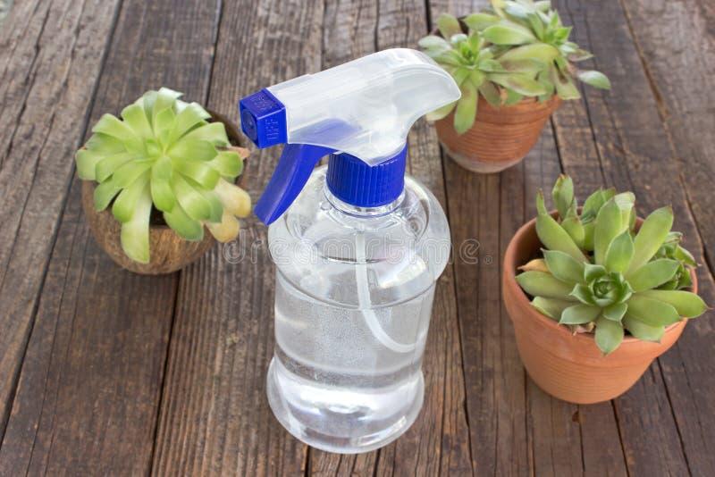 Голубая пластичная бутылка брызга с poted заводами на деревянной предпосылке стоковые фото