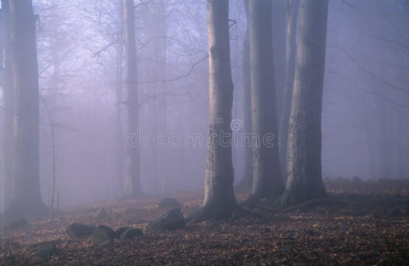 Download голубая пуща стоковое изображение. изображение насчитывающей туманно - 493013