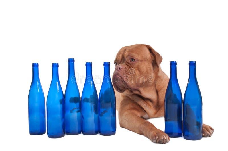 голубая собака бутылок стоковое изображение rf