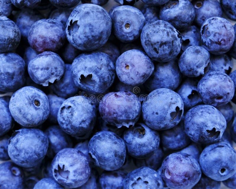 Голубика, плод лета, конец вверх Большая текстура черники для предпосылки Еда Vegan сырцовая, здоровый образ жизни, витамины стоковое фото