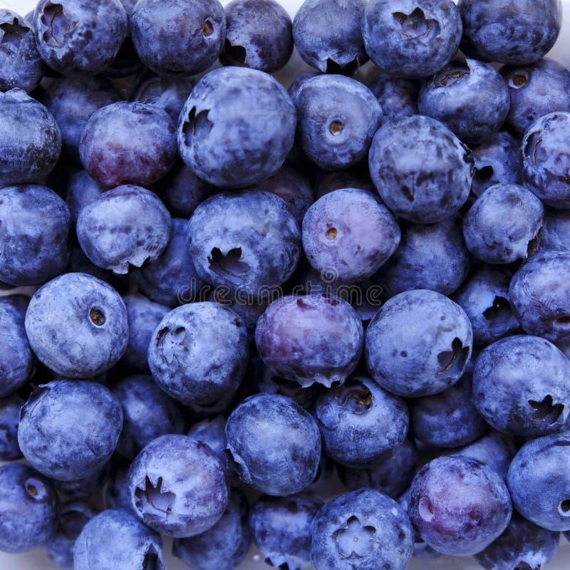 Голубика, плод лета, конец вверх Большая текстура черники для предпосылки Еда Vegan сырцовая, здоровый образ жизни, витамины стоковая фотография