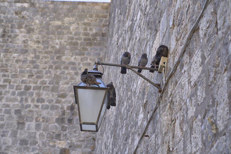 Голуби в каменной стене стоковая фотография