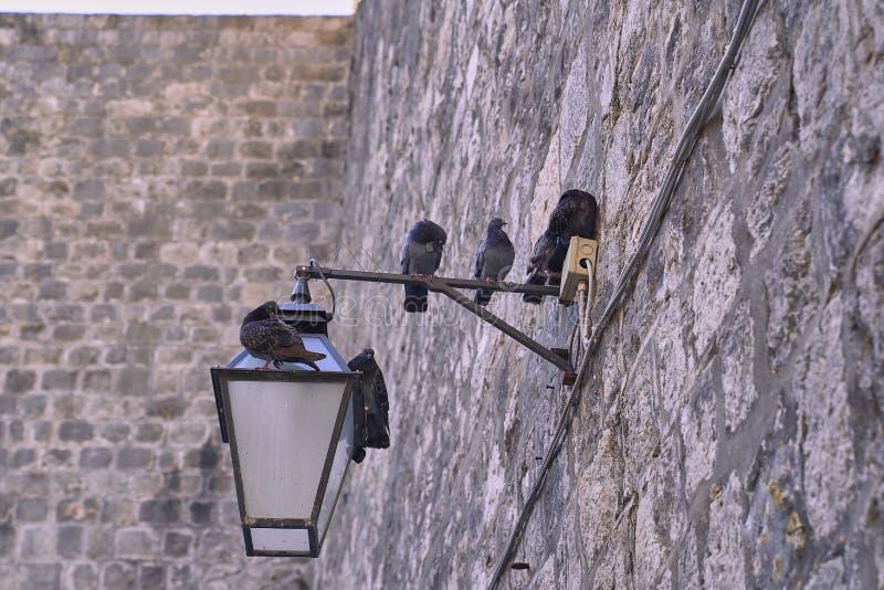 Голуби в каменной стене стоковое фото rf