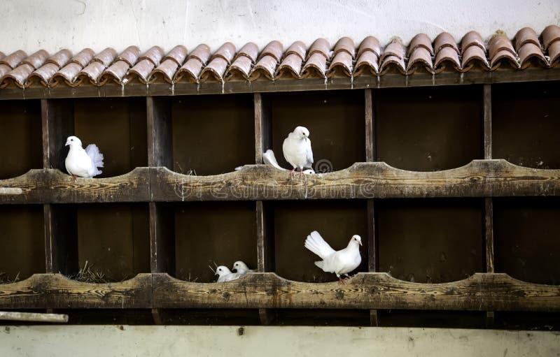 Голуби в dovecote стоковое изображение