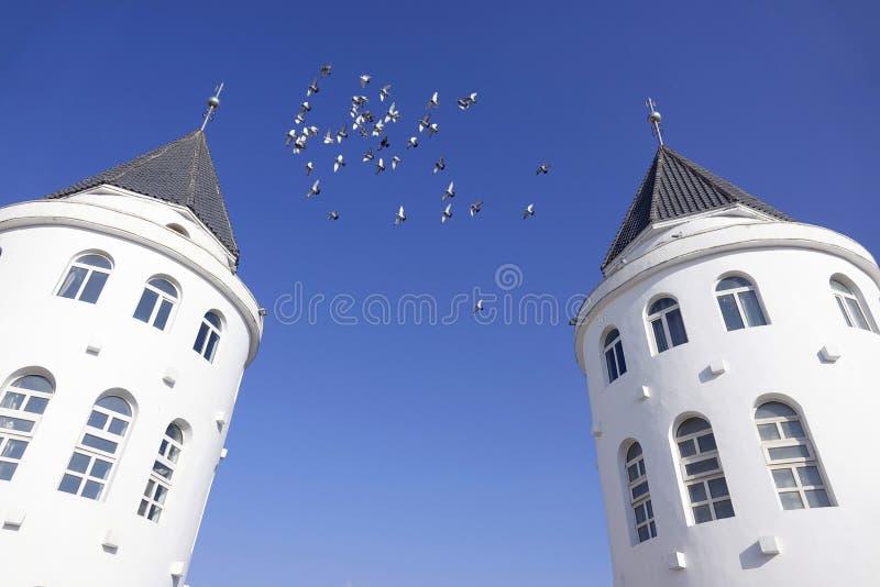 Голуби и здание стоковая фотография rf
