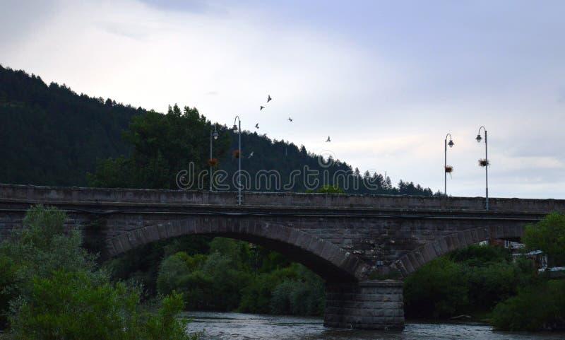 Голуби летают на сумрак стоковое изображение