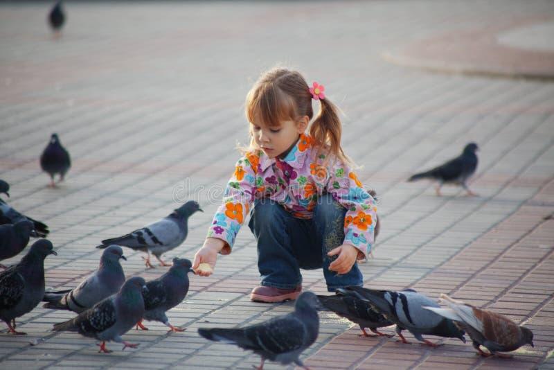 голуби ребенка стоковое фото