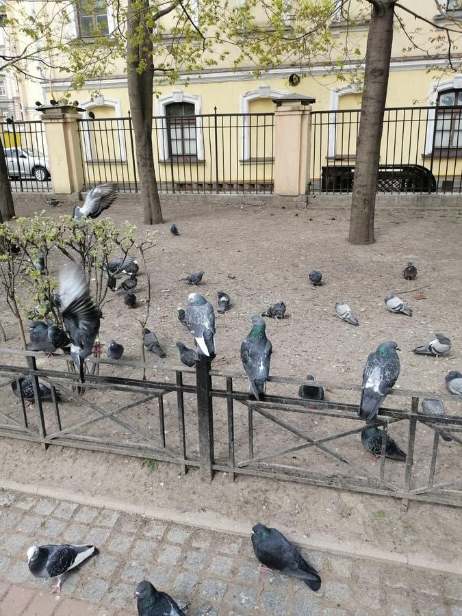 Голуби сидят в парке стоковое фото rf