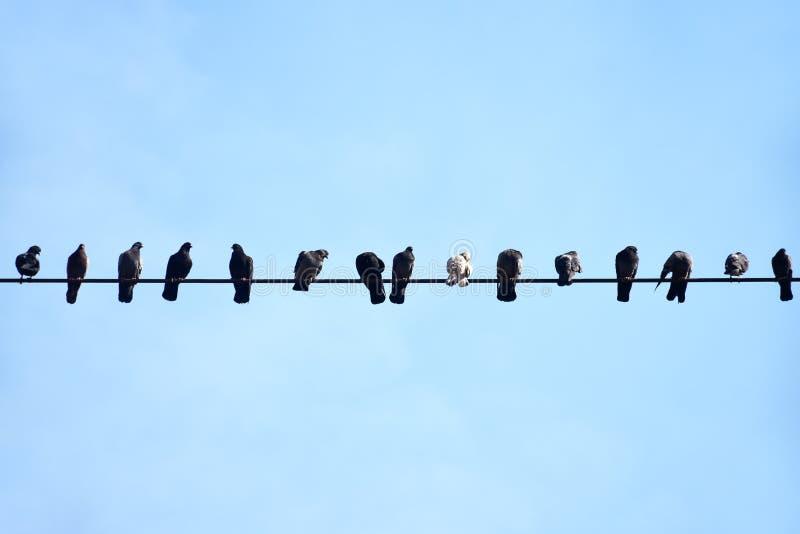 Голуби сидя на электрическом проводе высотного здания стоковые изображения