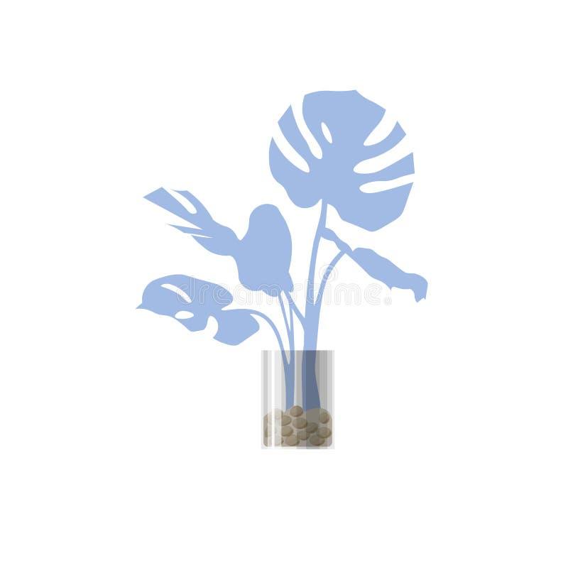Голубое комнатное растение в баке стоковые изображения