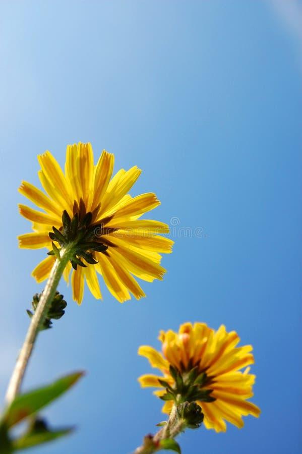 Download голубое лето неба цветка вниз Стоковое Изображение - изображение насчитывающей кровопролитное, green: 6863825