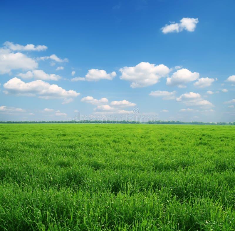 голубое небо зеленого цвета травы стоковые фото