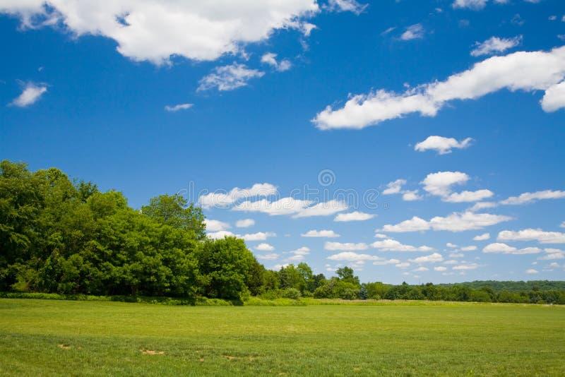 голубое небо зеленого цвета травы стоковое фото